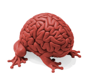 enactive brain